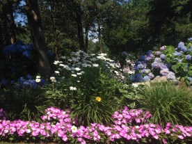Impressive flower bed on the way to Brewster, Cape Cod