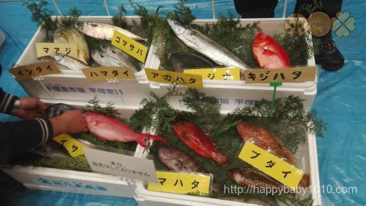 横浜中央市場 魚食を普及する会