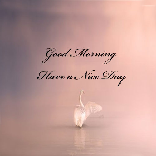 Good morning pictures wallpaper for whatsapp