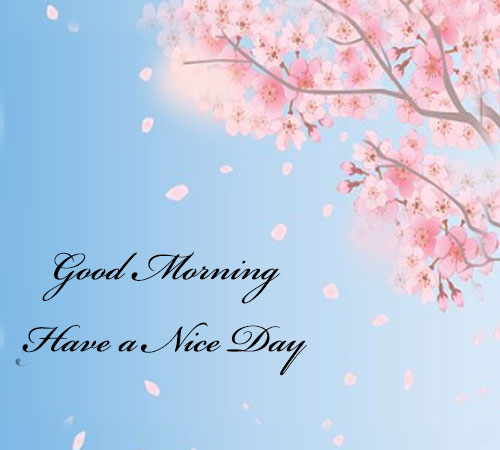 Whatsapp Good Morning Photos hd download