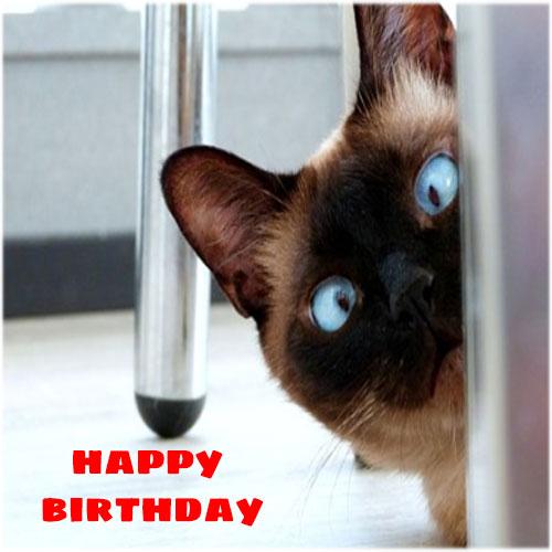 Funny happy birthday photo free hd download