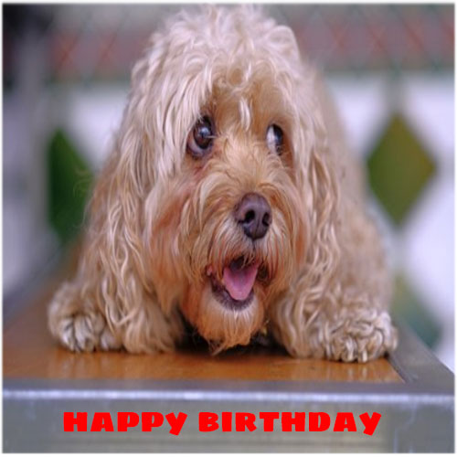 Happy birthday images funnyfree hd download