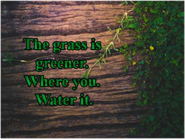 letter-board-quotes-grass