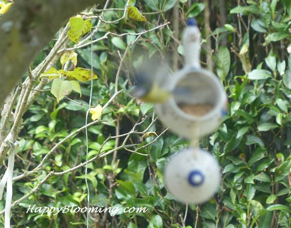 mangeoire oiseaux feeder birds diy