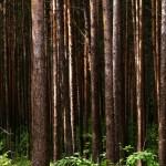 tree-1278787_1280