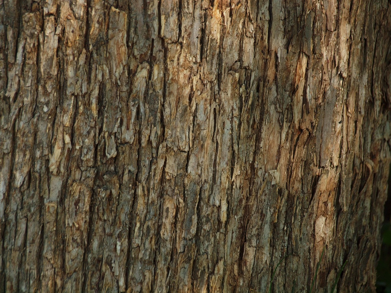 tree-218738_1280