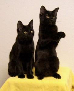 Merak & Nashira @ Happy Cats