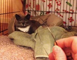Lady Gray @ Happy Cats