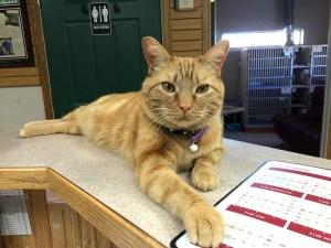 Clancy @ Cat Specialist