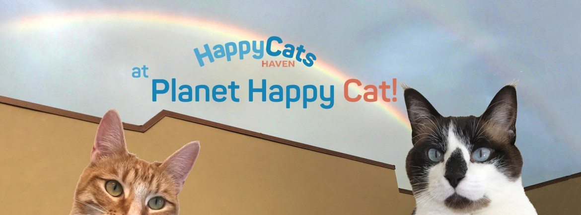 Happy Cats Haven – Giving homeless Colorado cats another