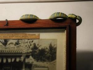CNY snake