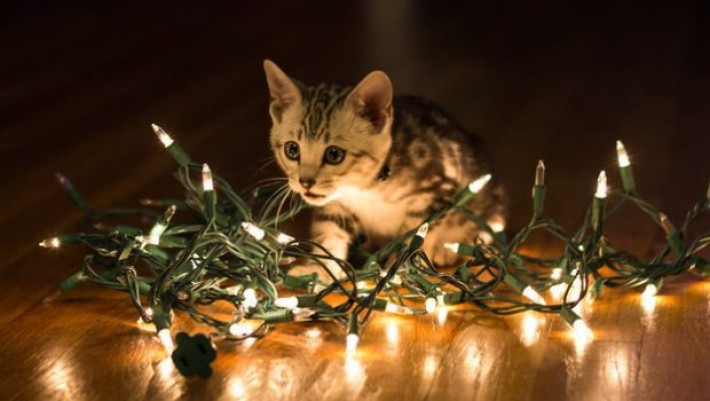 Sweet N Darling Christmas Animals 14 Christmas Kittens