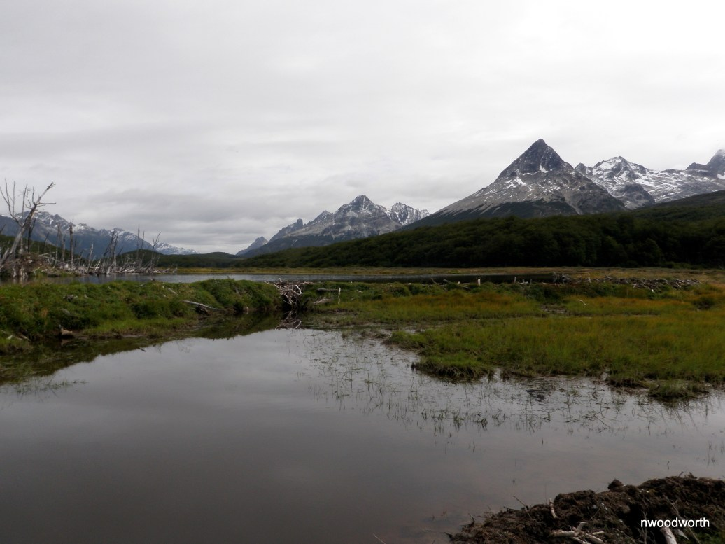 Beaver dams, ponds, & lodges dot the scene of Tierra del Fuego