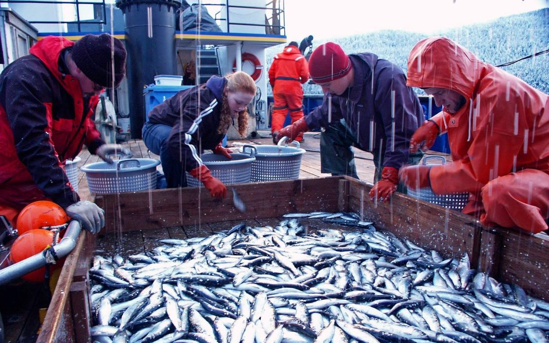 World Fisheries Day – November 21, 2020