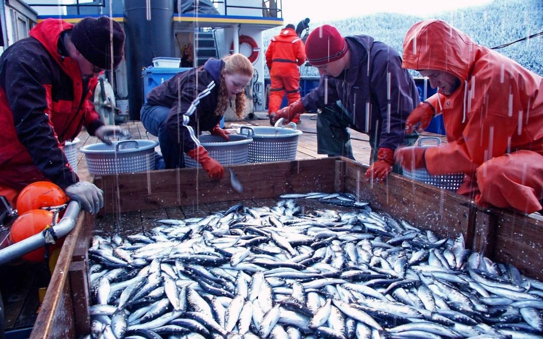 World Fisheries Day – November 21, 2019