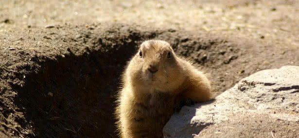 Groundhog Day – February 2, 2021