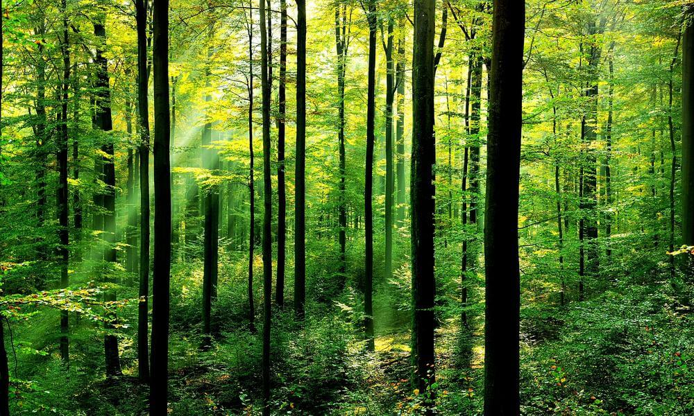 International Day of Forests - Forest Day
