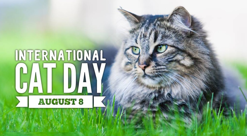 International Cat Day August 8 2020 Happy Days 365