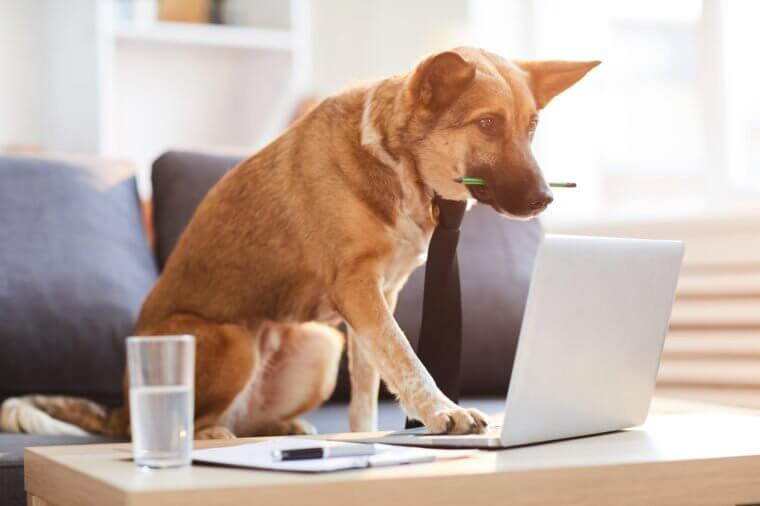 Work Like a Dog Day – August 5, 2020