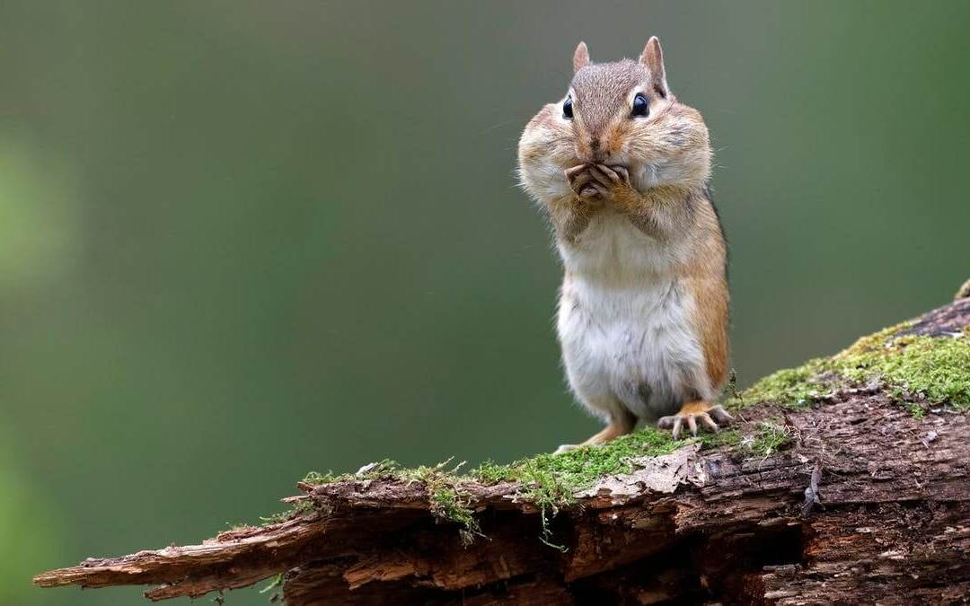 National Squirrel Appreciation Day – January 21, 2021