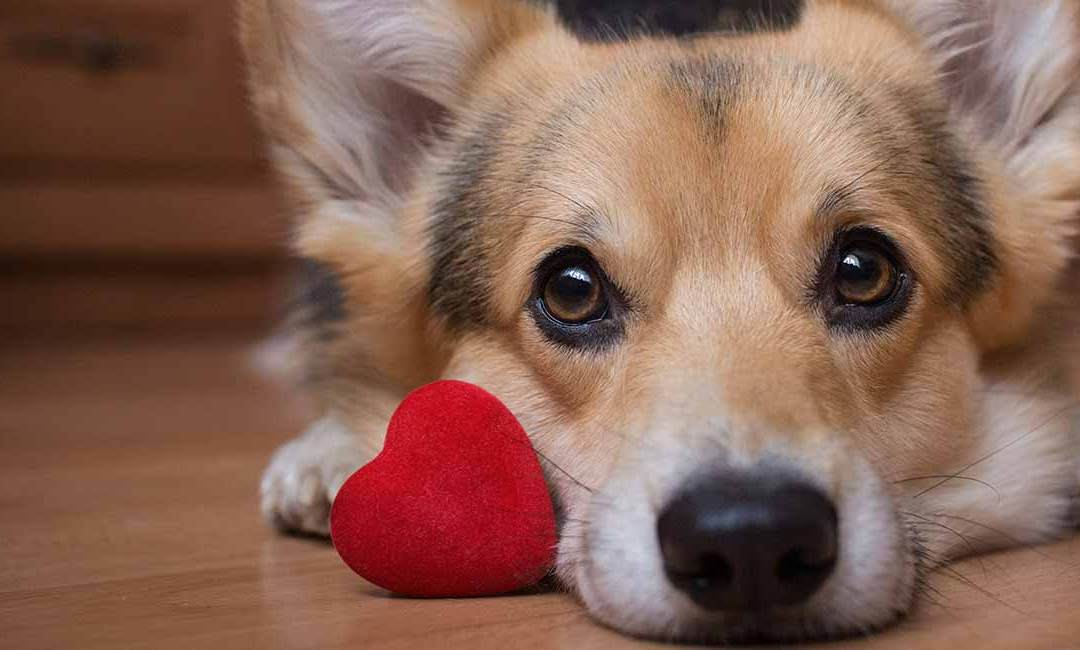 National Love Your Pet Day – February 20, 2021