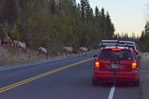 elk-herd-crossing-wayne-d-lewis-dsc_1443