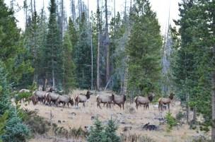 elk-herd-wayne-d-lewis-dsc_1457