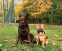 OUR HAPPY DOGS