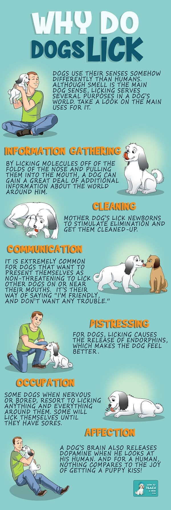 Why do dogs lick - infographic