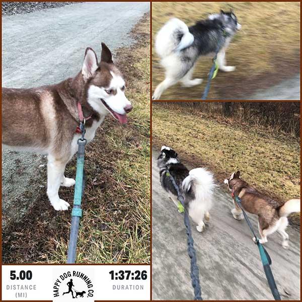 huskies running tracker