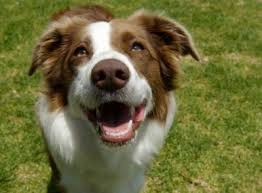 Image result for happy dogs