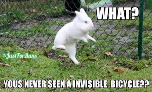 Bunny Meme Funny