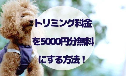 EPARKペットライフでトリミングが5000円分無料になるキャンペーン中!
