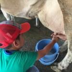 コープの無料イベントに参加!四日市市ふれあい牧場で高級牛乳飲み放題