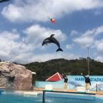 イルカと遊べる伊豆下田海中水族館の楽しみ方!割引クーポン利用でさらにお得に