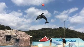 海中水族館ブログの口コミレポ