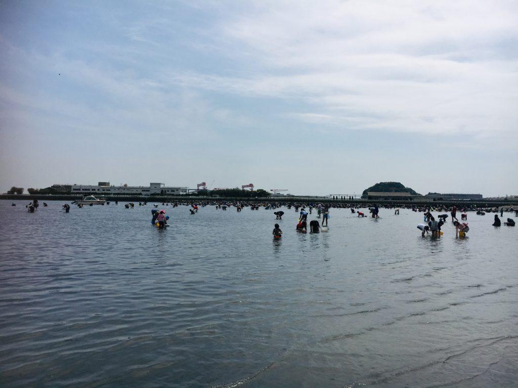 野島公園の潮干狩り情報