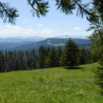 Protecting the Northern Yellowstone Ecosystem