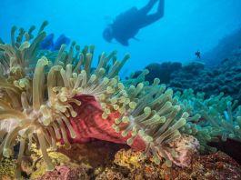 Coral Sanctuary Discovered off Kenyan and Tanzanian Coast