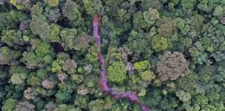 How Joe Biden can best put $20B to work saving the Amazon