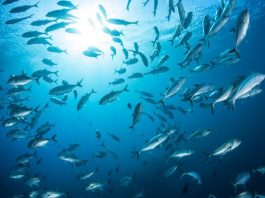 A Win for the Oceans: International Sustainability Agreement