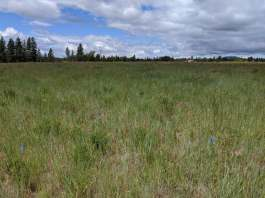 Buy Land & Plant — An Adventure in Reforesting
