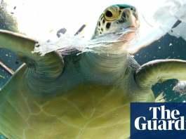 Queensland passes laws banning 'killer' single-use plastics