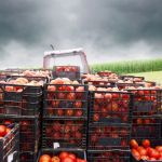 How Do We Decarbonize the Food System?