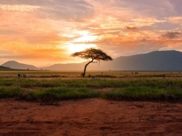 How 'frugal innovation' could aid Africa's green development