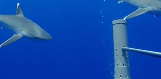 UK launches world's largest ocean monitoring system