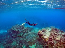 Full circle: How corals survive on the waste of their predators