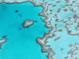 This 'citizen science' project means anyone can help map the Great Barrier Reef - from the comfort of home