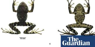 Scientists name frog found in Ecuadorian Andes after Led Zeppelin