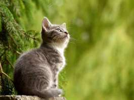 Companion animals in the climate crisis: How pet owners can reduce their environmental impacts